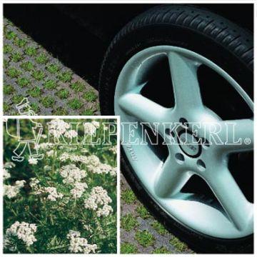 Kiepenkerl RSM 5.1.1 Parkplatzrasen mit 2 % Achillea 10 kg