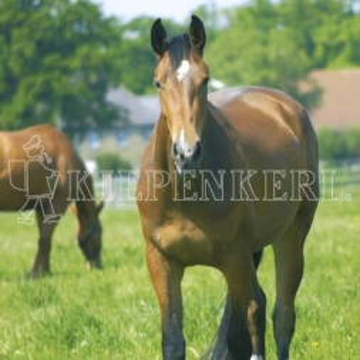 Kiepenkerl Country Horse 2120 Pferdeweide Balance - 10 kg