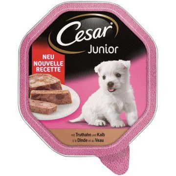 Cesar Schale Junior Truthahn & Kalb in Pastete 150g (Menge: 14 je Bestelleinheit)