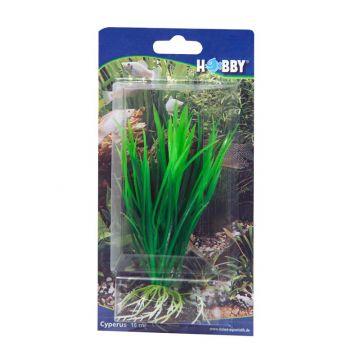 Dohse Cyperus 16 cm