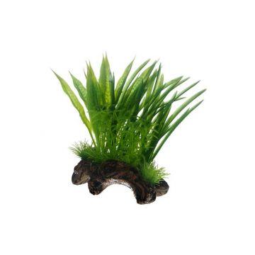 Dohse Flora Root  1   S   17 cm