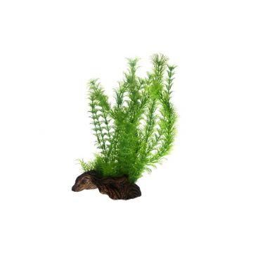 Dohse Flora Root  3   L   30 cm