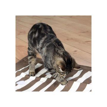 Trixie Cat Activity Pföteldecke braun/creme 70 x 50 cm