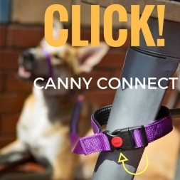 Canny Hundeleine CONNECT 15mm - lila