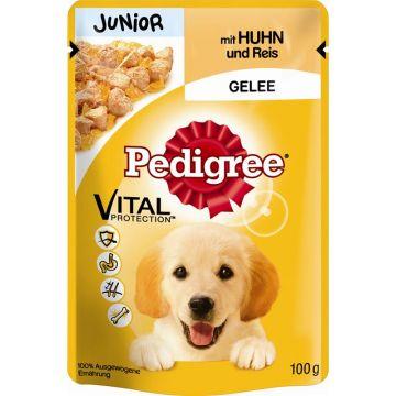 Pedigree Portionsbeutel Junior Huhn & Reis in Gelee 100g (Menge: 24 je Bestelleinheit)
