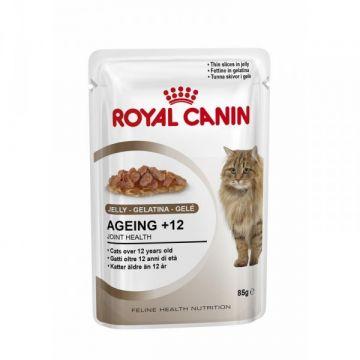 Royal Canin Feline Portionsbeutel Multipack Ageing +12 in Gelee 12x85g